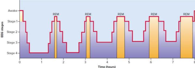sleep stages and brain activity 8 hour sleep cycle